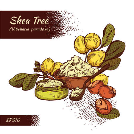 Composition with branch Shea tree with fruits, nuts, leaves and Shea butter and wooden plate with shea butter, spoon filled with shea butter, cream in jar, cream in tube. Detailed hand-drawn sketches, vector botanical illustration. For cosmetics, medicine, aromatherapy. For menu, label, packaging design. Illusztráció
