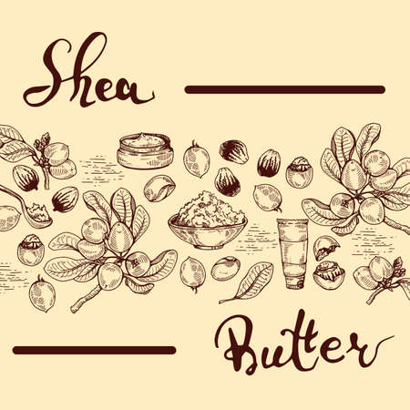 Background with branch Shea tree with fruits, nuts, leaves and Shea butter and wooden plate with shea butter, spoon filled with shea butter, cream in jar, cream in tube. Detailed hand-drawn sketches and lettering, vector botanical illustration. For cosmetics, medicine, aromatherapy. For menu, label, packaging design. Illusztráció