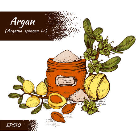 Composition with branch argan tree with fruits, nuts argans, leaves and accessories Detailed hand-drawn sketches, vector botanical illustration.