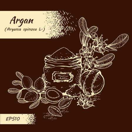 Composition with branch argan tree with fruits, nuts argans, leaves, flower argans and and accessories Detailed hand-drawn sketches, vector botanical illustration. For menu, label, packaging design. Illusztráció