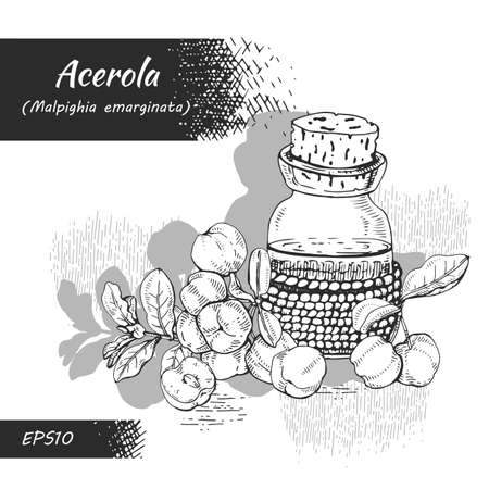 Still life with branch acerola cherry, fruit, flower and glass bottle with oil and accessories. Detailed hand-drawn sketches, vector botanical illustration. For menu, label, packaging design. Illusztráció