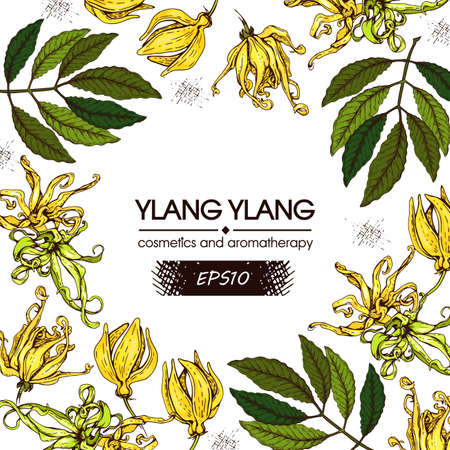 Circle frame with flowers and leaves of ylang-ylang. Detailed hand-drawn sketches, vector botanical illustration. For menu, label, packaging design.