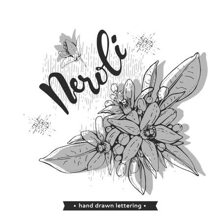 Bitter orange flowers, buds, fruits with lettering. Detailed hand-drawn sketches, vector botanical illustration. For menu, label, packaging design.