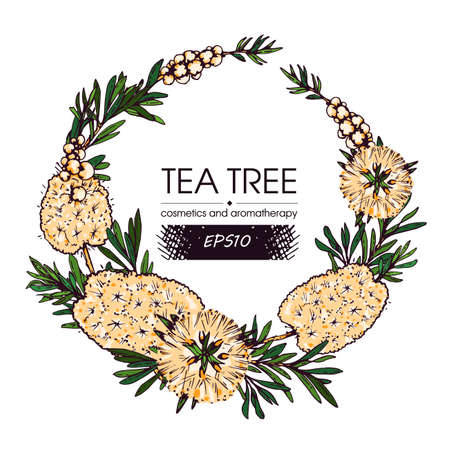 Frame with branches with leaves and flowers of tea tree. Detailed hand-drawn sketches, vector botanical illustration. For menu, label, packaging design.