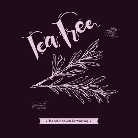Branches with leaves of tea tree with lettering tea tree. Detailed hand-drawn sketches, vector botanical illustration. For menu, label, packaging design.