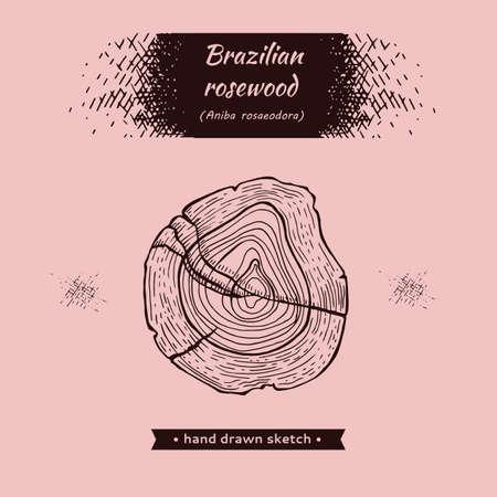 Cut of a Rosewood. Detailed handdrawn sketches, vector botanical illustration. For menu, label, packagig design. Illusztráció