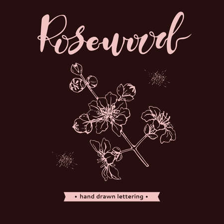 Rosewood twig with flowers and buds and lettering Rosewood. Detailed hand-drawn sketches, vector botanical illustration. For menu, label, packaging design.