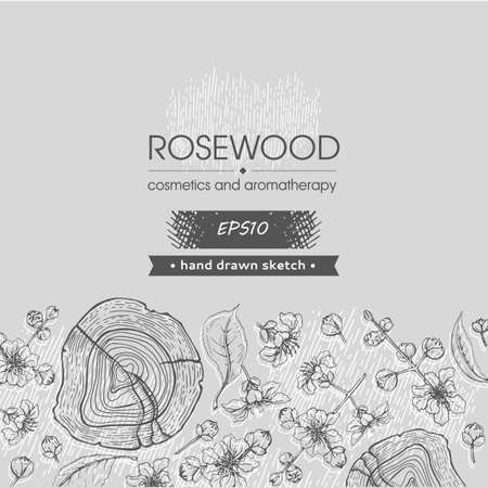 Background with cut of a Rosewood and twigs with flowers and buds. Detailed hand-drawn sketches, vector botanical illustration. For menu, label, packaging design Stock fotó - 159812869