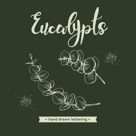 Eucalyptus leaves, Young shoots and branches of eucalyptus, buds and lettering Eucalypts