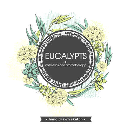 Frame with Eucalyptus leaves, young shoots and branches of eucalyptus with flowers, buds and seeds . Detailed hand-drawn sketches, vector botanical illustration.