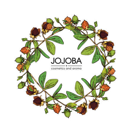Frame with Jojoba branches with fruits and flowers, leaves. Fruit jojoba in a peel and without . Detailed hand-drawn sketches, vector botanical illustration. Illusztráció