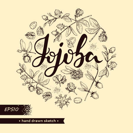 Circle filled Jojoba branches with fruits and flowers, leaves. Fruit jojoba in a peel and without and lettering Jojoba . Detailed hand-drawn sketches, vector botanical illustration. Illusztráció