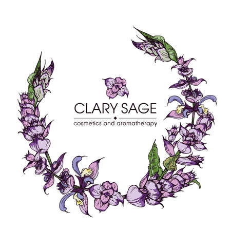 Frame with Clary sage twigs with leaves and flowers . Detailed hand-drawn sketches, vector botanical illustration. Illusztráció
