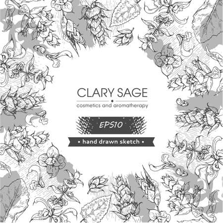 Background filled with Clary sage twigs with leaves and flowers and with empty circle inside. Detailed hand-drawn sketches, vector botanical illustration.
