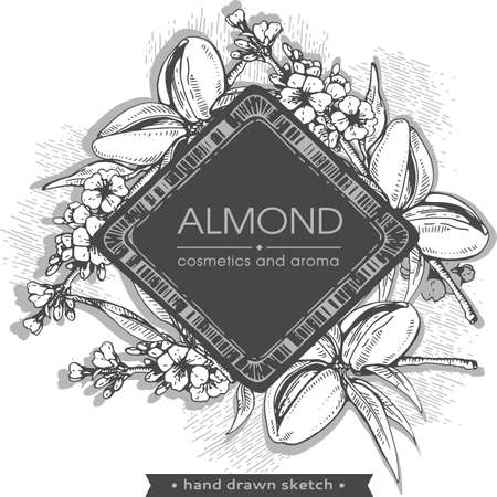 Frame with branch of almonds with nuts, fruits, flowers. Detailed hand-drawn sketches, vector botanical illustration. Illusztráció