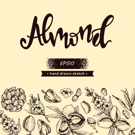 Background with Almond kernels of nuts and a branch of almonds with nuts, fruits, flowersand lettering Almond. Detailed hand-drawn sketches, vector botanical illustration. Illusztráció