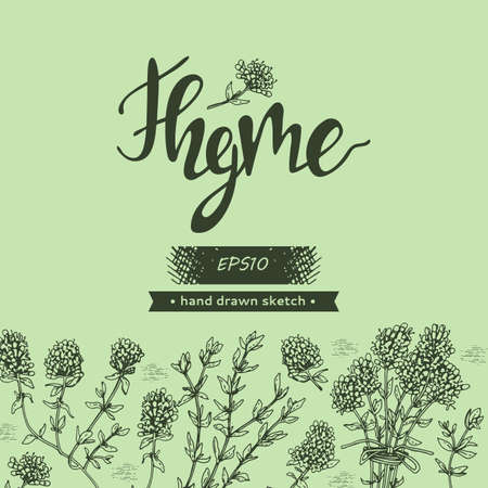 Background with twig of thyme with leaves and flowers and lettering Thyme. Detailed hand-drawn sketches, vector botanical illustration.