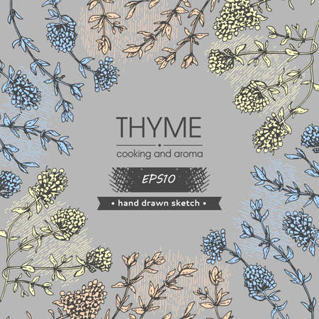 Background filled with twig of thyme with leaves and flowers and with empty circle inside. Detailed hand-drawn sketches, vector botanical illustration.