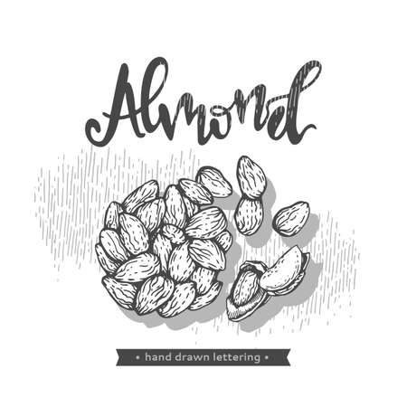 Almond kernels of nuts. Detailed hand-drawn sketches, vector botanical illustration.