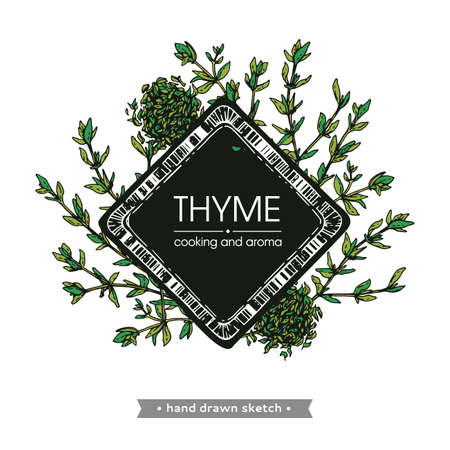 Frame with twig of thyme with leaves. Detailed hand-drawn sketches, vector botanical illustration Stock fotó - 162167064