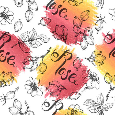 Seamless Pattern with Rosa canina. Detailed hand-drawn sketches, vector botanical illustration.