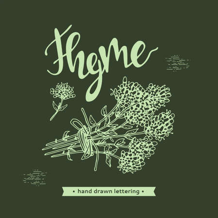 Twig of thyme with leaves and flowers and lettering Thyme. Detailed hand-drawn sketches, vector botanical illustration.