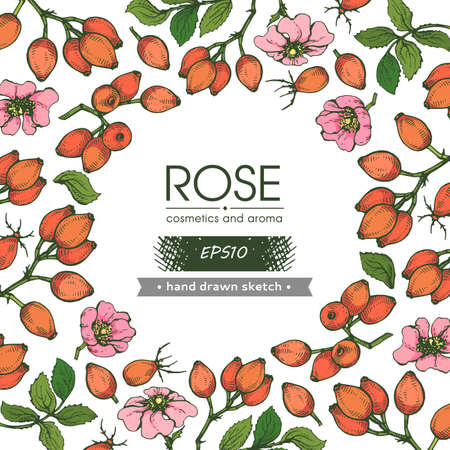 Background filled with Rosa canina and with empty circle inside. Detailed hand-drawn sketches, vector botanical illustration.
