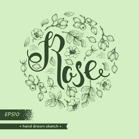 Circle filled Rosa canina and lettering Rose. Detailed hand-drawn sketches, vector botanical illustration.