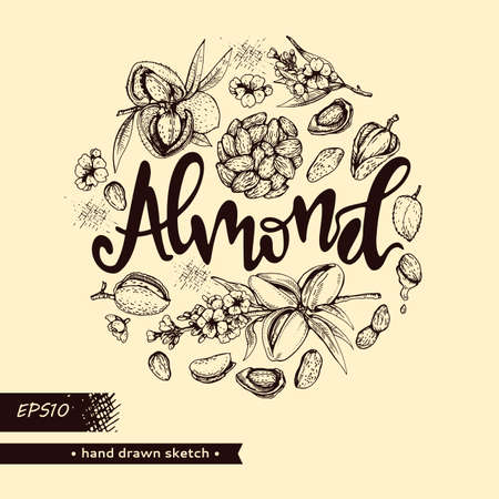 Circle filled Almond kernels of nuts and a branch of almonds with nuts, fruits, flowersand lettering Almond. Detailed hand-drawn sketches, vector botanical illustration. Illusztráció