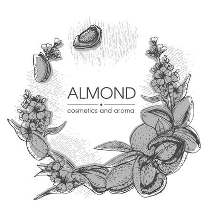 Frame with Almond kernels of nuts and a branch of almonds with nuts, fruits, flowers. Detailed hand-drawn sketches, vector botanical illustration. Illusztráció