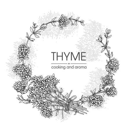 Frame with twig of thyme with leaves and flowers. Detailed hand-drawn sketches, vector botanical illustration