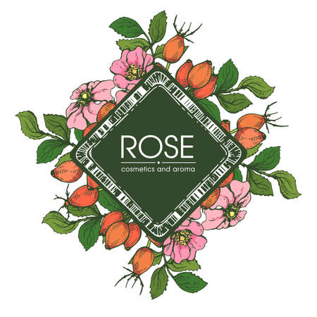 Frame with Rosa canina. Detailed hand-drawn sketches, vector botanical illustration.