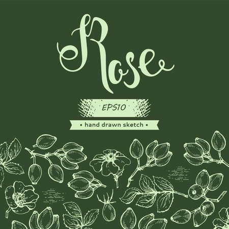 Background with Rosa canina and lettering Rose Detailed hand-drawn sketches, vector botanical illustration.
