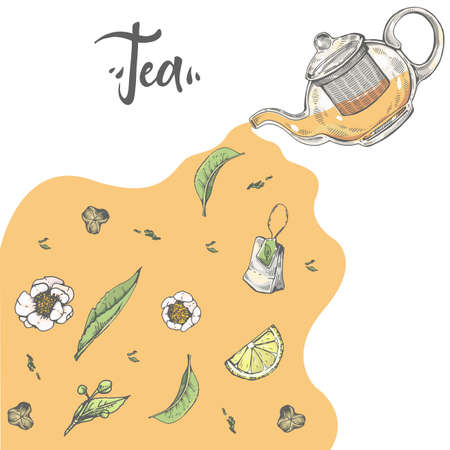 Hand-drawn sketch kettle with tea leaves and flowers, vector illustration. Иллюстрация