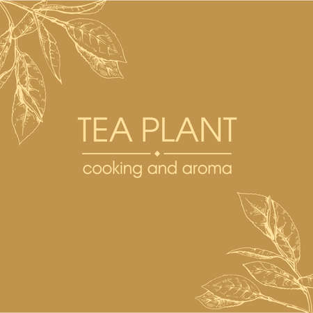 Hand-drawn sketch tea plant cooking and aroma, vector illustration.