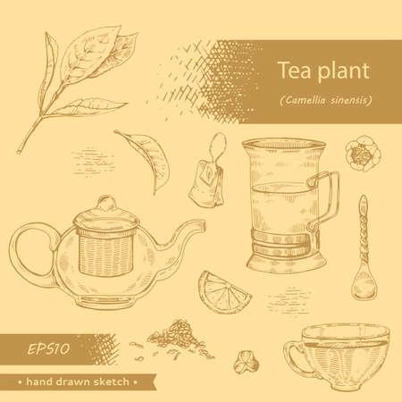 Hand-drawn sketch tea plant cmellia sinensis, vector illustration. Иллюстрация