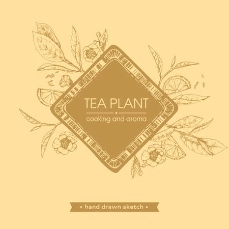 Hand-drawn sketch tea plant with cooking and aroma, vector illustration. Иллюстрация
