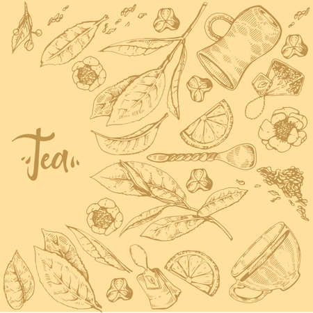 Detailed hand-drawn sketch tea plant and cooking tools, vector illustration.