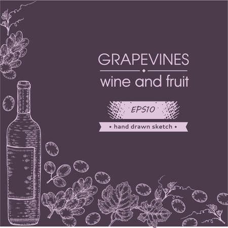 Collection of wine bottle and bunches of grapes. Detailed hand-drawn sketch, vector illustration.