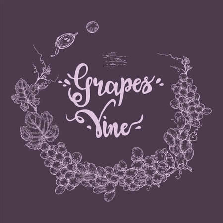 Circle filled with different bunches of grapes and lettering grapes, vine. Detailed hand-drawn sketch, vector illustration. Иллюстрация