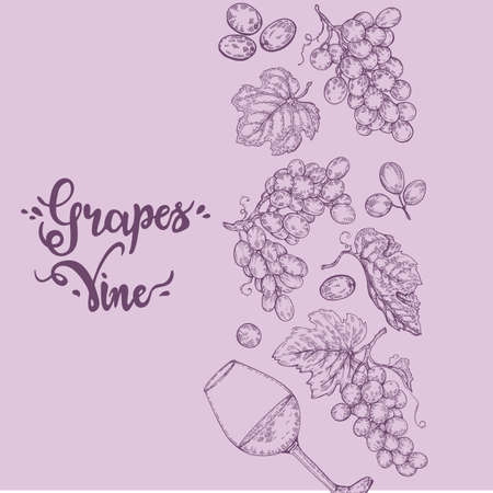 Background filled with bunches of grapes and with lettering grapes, vine. Detailed hand-drawn sketch, vector illustration.
