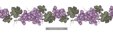 Bunch of grapes on the white background.Detailed hand-drawn illustration. Иллюстрация