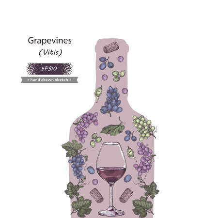 Collection bunches of grapes and wine glass in the form of bottle. Detailed hand-drawn sketch, vector illustration. Иллюстрация