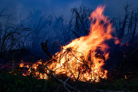Forest fire Bushes are burning, the air is polluted with smoke. Fire, close-up. Deforestation environmental jungle. Farmers burn rainforest and destroy to expand their plantations.