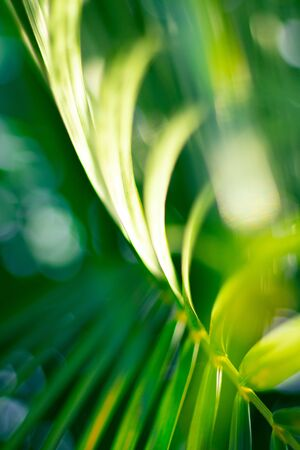 Abstract floral blurred background. Tropical palm leave backdrop