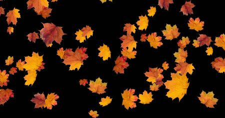 Falling Autumn leaves on black background for Thanksgiving Halloween party and seasonal rural festival. Digital 3D