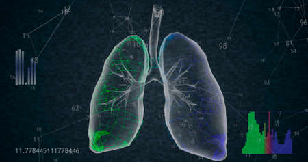 Rotating 360 low polygonal lungs 3D model on black background with animated increasing numbers and diagrams. 3D illustration Imagens