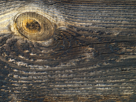 Old wooden board viewed from up close. photo