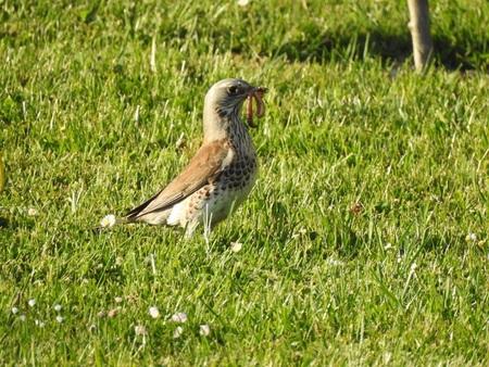 Bird with tasty prey Stock Photo