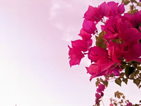 Pink flowers and sky.